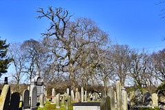 St Machars Cathedral - Old Aberdeen Scotland - 15th March 2019 (DanoAberdeen) Tags: spring winter autumn bare undressed naked nude stmacharscathedral saintmachar stmachar trees tree 2019 candid amateur aberdeen aberdeenscotland abdn abz aberdeenshire aberdeencity aberdeenuniversity aberdeenunionstreet universityofaberdeen cathedral danoaberdeen danophotoggraphy cemetery cemetary cementerio ancient historicscotland historicenvironmentscotland danophotography oldtimer oldaberdeen crypt secondlife goth christian christianity nikond750 grampian stmacharcathedral scotland museum graveyard 1800s 1900s victorian weathered scotch scottish grave tomb outdoors history
