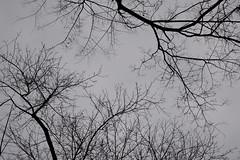 1PRO_1819 (Radu Pavel) Tags: radu radupavel pavel fotononstop cosmos ©radupavelallrightsreserved ©radupavelallerechtevorbehalten ©radupaveltodoslosderechosreservados ©radupavel版権所有 nature natur naturaleza 自然 tree baum árbol 木 outdoor alairelibre imfreien ルーマニア world welt mundo 世界 winter invierno 冬 neural 神経の 2018 abstract abstrakt abstracto 抽象