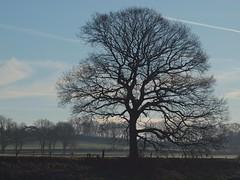 Baum (photohml) Tags: photograf baum tree olympus zuiko 70300 e620 2019 natur outside pointeofview