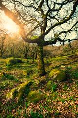 En el Bosque de la niebla ... (Fran-Garrido) Tags: nikon d750 irix15mmf24 qdd malaka arbol bosque bosquedelaniebla cádiz losalcornocales fb 500px
