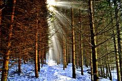 La forêt enchantée (Nathery Reflets) Tags: hiver neige arbres forêt chemin sentier alsace hohwald hochfeld basrhin