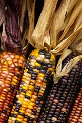 Expired Corn (ranzino) Tags: harrisburg pa pafarmshow2019 pafarmshow pennsylvania pennsylvaniafarmshowcomplex corn unitedstates us