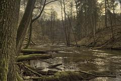 Lyna river near Rus (grzegorzmarek) Tags: rokkor 28mm 28 28mm28 minolta md ilce7 lyna river rus olsztyn