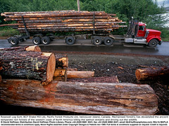 "Logging Truck 04 (hoffman) Tags: arboriculture bc britishcolumbia canada countryside deforestation felling forestry haulage haulier hauling heap horizontal industry interfor island labor load logging logs lorry lumber nature outdoors pile road stack timber track tractor trailer transport trees truck trucking trunk vancouver vancouverisland vehicle wood woodlands work 181112patchingsetforimagerights davidhoffman wwwhoffmanphotoscom portalberni davidhoffmanphotolibrary socialissues reportage stockphotos""stock photostock photography"" stockphotographs""documentarywwwhoffmanphotoscom copyright"