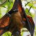 Bat hanging down
