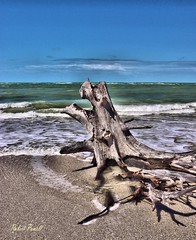 Beach Art (robert (Bobby)powell) Tags: leecountyfl floridabeaches florida robertbobbypowell nature seascape gulfofmexico landscape beachart rpowell canon naturephotography naturephotographer artistic canoneos77d gulf beach water 77d tree sand southwestfl usa bluesky spring