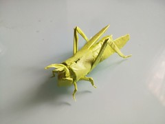 Locust (GGIamBatman) Tags: origami papiroflexia escarabajo beetle robert locust insect insecto