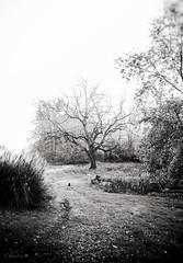 cat in a landscape (Jen MacNeill) Tags: black cat white bnw bw tree landscape