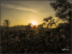 A Look Back To September .. (Picture post.) Tags: landscape nature green sunrise flowers balsam willow paysage arbre backlight