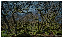 Fairy Glen (OATH Photography by Alison Richards) Tags: ancient woodland trees moss old history green blue padleygorge burbage hathersage shefield yorkshire derbyshire peakdistrict painterly hathersageshefield derbyshirepeakdistrict englandunitedkingdom