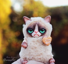 Charming 🐈 (pure_embers) Tags: pure embers laura uk pureembers photography kitty teddy grumpy cat art doll cute adorable rioky studio cookie sun charming