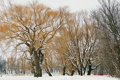 DSE_6500 (pezlud) Tags: 20190223 snow winter winterscenes trollwoodpark fargo nd usa landscape white mantleofwhite seaofwhite dashesofcolor color