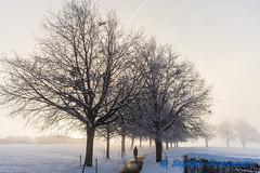 Chemin des Tilleuls (couleurs) (Stefano Procenzano) Tags: villarssurglâne fr svizzera ch cantonfribourg chemindestilleuls villarsvert nikon nikkor d600 nikond600 28105mmf3545d