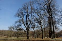 Berliner Bäume im Winter- waiting for spring (Sockenhummel) Tags: baum glienicke trees bäume park garten berlin winter fuji x30