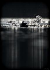 Lord of darkness. (mirosławkról) Tags: poland silesia wild wildlife water winter pond lake animal bird sunrise bokeh 150600 nikonnaturephotography nikon łyska coot fulica atra blackandwhite
