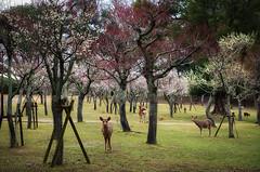 B85_0753_1024 (YYDB) Tags: kyoto japan 京都 日本