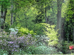 Highlights in the Park (clarkcg photography) Tags: flowers bushes trees green color light gorgeousgreenthursday