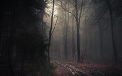 When the Woods are mourning (Netsrak) Tags: baum bäume eu europa europe forst januar january landschaft natur nebel wald fog forest landscape mist nature tree trees winter woods eifel