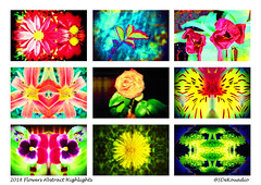 Flowers Abstract 2018 Highlights (Stephenie DeKouadio) Tags: abstract abstractart abstractflower abstractflowers art artistic darkandlight colorful