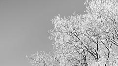 Winter Sky (Christoph Wenzel) Tags: deutschland blackandwhite neuhaus sonyalpha6000 sonysel85mmf18 thüringen bw natur winter neuhausamrennweg de