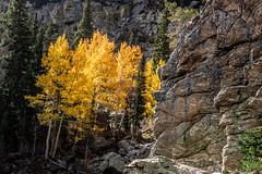 A-3314 (markbyzewski) Tags: landscape dreamlake fall aspen rockymountainnationalpark estespark colorado