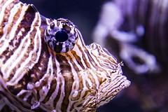 fisheye perspective (bhermann.hamburg) Tags: fish eye fisheye fisch auge streifen