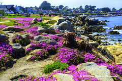 PACIFIC-GROVE_1D56320 (Donna Molinari Photography) Tags: