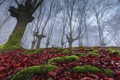 basoa 2 (juan luis olaeta) Tags: paisajes landscape natura forest bosque basoa hayedo pagoa photoshop canoneos60d fog laiñoa nieblas