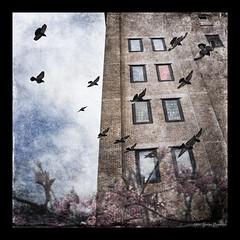 A Highline Day Dream (GAPHIKER) Tags: spring pink cherry tree bloom highline newyorkcity pigeons texture skeletalmess art warhol window hss happyslidersunday