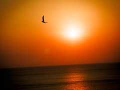Sunrise over the Black Sea (Sebastian Pier Filip) Tags: canon g16 pointandshoot pointnshoot compact pocketablecamera sunrise blacksea bulgaria seagull bird colors orange clearsky