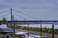 34 Dusseldorf octobre 2018 - le Rhin le matin (paspog) Tags: dusseldorf düsseldorf allemagne germany deutschland rhin rhein rhine octobre october oktober 2018 rivière fleuve river fluss pont pontsuspendu bridge brücke