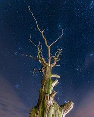 Dead tree on under the stars (Andy barclay) Tags: tree sky space galaxy milkyway stars star clouds long exposure sigma nikon d7100 mafrotto 1020mm blue