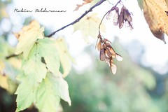 Fly away (Pamba-) Tags: fly nature fall autumn weather macro closeup angelsfly beautiful