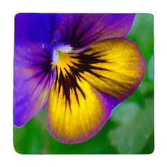 Viola (Alex . Wendes) Tags: viola flower flowermacro macro purpleandyellow lensbaby lensbabycomposor sweet35 sweet35optic 20mmextensiontube f8 d7000 nikond7000