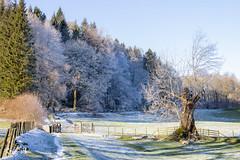 Winter in the Lake District - Hawkshead (Renate van den Boom) Tags: 01januari 2019 boom bos europa grootbrittannië jaar lakedistrict landschap maand natuur renatevandenboom seizoenen winter