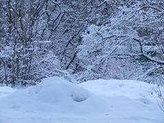 much snow (VERUSHKA4) Tags: snowfall snow neve neige canon nature europe russia moscow city ville view vue winter wintertime hiver bush february season trunk tree branch bough coldseason park white blanc grey landscape scape snowy snowylandscape