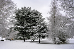 WNY Audobon snow covered trees c-0133 (Ron Biedenbach) Tags: trees snow winter park