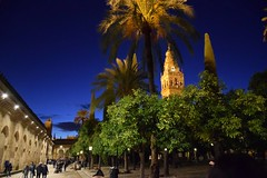 Mezquita (msamrodriguez) Tags: patio naranjos oranges mezquita mosque catedral cathedral cordoba andalucía garden jardin palm trees arbol night noche
