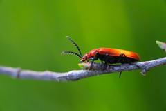 bug2 (Roberto_Mosca) Tags: