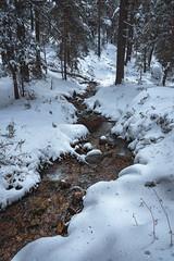 Navalmedio (pinusylvestris) Tags: naturaleza agua snow nieve spring rio d7500 nikon sigma 1770 contemporary look