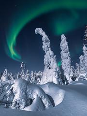 Solar wind (Andrei Baskevich) Tags: auroraborealis aurora northernlight winter trees frost frozen light night top20aurora