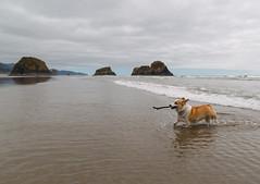IMG_0302.jpg (Jonathan W Button) Tags: oregoncoast oregon oregontrip pacificocean hiking lola cannonbeach ecolastatepark cresentbeach ocean
