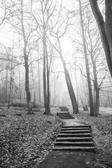 Foggy Afternoon (Rudi Pauwels) Tags: 2019onephotoeachday goteborg gothenburg hisingen lundby ramberget keilerspark fogg foggy trees winter cold stairs steps tamron 18270mm tamron18270mm nikon d7100 nikond7100 20365