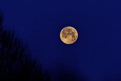Fin de l'éclipse de lune 21/01/2019 (Elisabeth Lys) Tags: eclipse nikon sigma d7200 lune moon totallunareclipse lunareclipse astrophotography