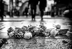 A good year for the roses. (Mister G.C.) Tags: blackandwhite bw sonya6000 sonyalpha6000 mirrorless streetphotography urbanphotography candid street monochrome photograph image lowpov lowpointofview roses flowers urban town city sony a6000 35mmf18 sel35f18 35mm primelens schwarzweiss strassenfotografie glasgow scotland europe