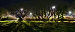 Panoramic Tree Silhouette (Inner Vision Productions) Tags: wood woodland tree oak treelined mature majestic old english field meadow night playing sports ground recreation football rugby pitch floodlight backlit floodlit spotlight spotlit isleofwight sandown academy bay highschool light affect shadow dark contrast winter autumn bare naked leaves leaf illuminated silhouette ivy nature beauty scenic panorama panoramic scene edge natural pattern innervision photography mattblythe nikon d5200 green blue misty eery mystery surreal enchanted enchanting forest