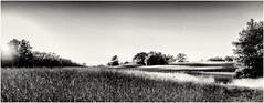 Setting Sun - no Clouds... (revisited) (Ody on the mount) Tags: anlässe bäume em5 felder filmkorn mzuiko1250 omd olympus pflanzen rahmen schwäbischealb sonnenuntergang wanderung bw fields monochrome sw trees