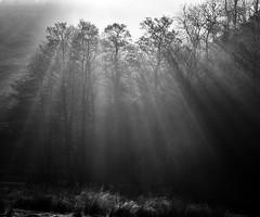 Dove Dale (l4ts) Tags: landscape derbyshire peakdistrict whitepeak dovedale trees crepuscularrays shadows blackwhite monochrome contrejour mist