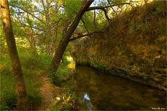 Ribera del Duratón (Jose Manuel Cano) Tags: segovia rio river duratón arbol color tree colour nikond5100 españa spain agua water reflejo reflection
