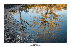 Warm reflection (Ignacio Ferre) Tags: embalsedelpontónalto sanildefonso segovia españa spain reflejo reflection reflex árbol tree nikon agua water naturaleza nature winter invierno